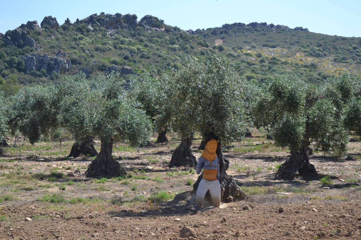 Muñeco  entre olivos